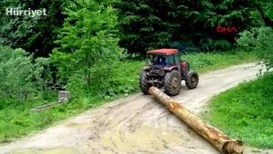 Fotokapanla tespit edilen kaçak ağaç kesimine suçüstü