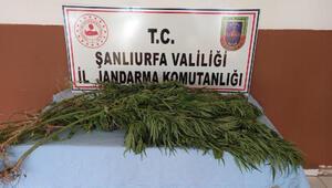Şanlıurfa'da uyuşturucu operasyonu: 2 tutuklama