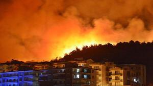 İzmirin Dikili ilçesinde zeytinlik ve çamlık alanda yangın çıktı