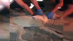 Sağlık ekibi acilin önüne gelen köpeği tedavi ettiler