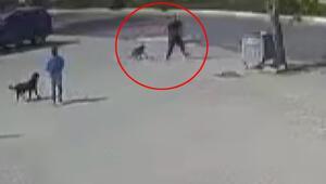 Büyükçekmecede dehşet Sokak köpeğini silahla öldüren saldırgan kamerada