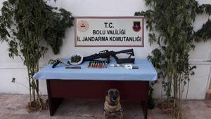 Boluda, uyuşturucu madde yetiştirilen eve operasyon: 2 gözaltı
