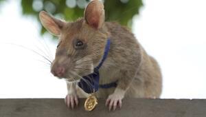 Kahraman fareye altın madalya verildi