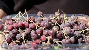 Süper meyve Trabzonda üreticilerin gelir kapısı olacak