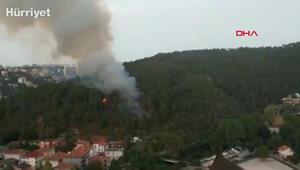Beykozda ormanlık alanda yangın