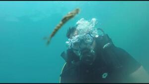 Van Gölünde yeni canlı türü bulundu