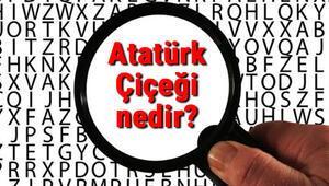 Atatürk Çiçeği nedir Atatürk Çiçeği nasıl bakılır ve çoğaltılır Atatürk Çiçeği bakımı, çeşitleri ve hastalıkları
