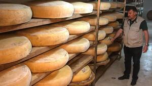 İsviçrenin Appenzeller peynirinin rakibi: Kars kaşarı