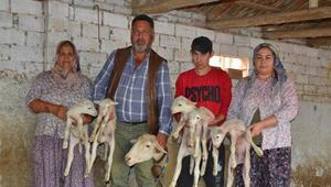 Kuzularına 'Maske', 'Mesafe' ve 'Hijyen' isimlerini verdiler