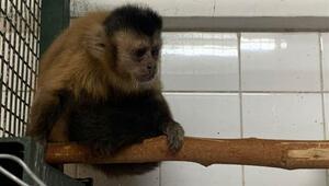 Hayvanat bahçesinden firar eden maymun elektrik akımına kapıldı