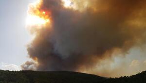Son dakika... Manisada orman yangını