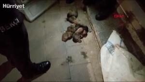 13 yavru köpek ağzı kapalı çuvala konularak sokağa atıldı; o anlar kamerada