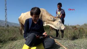 Öğrenci iki çoban, arazide cep telefonu ile EBAyı takip ediyor