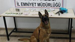 Uyuşturucular narkotik köpeği Sarike takıldı