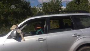Sürücü ile köpeğinin tehlikeli yolculuğu kamerada