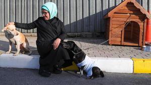 Emine Erdoğan, engelli köpek Leblebiyi sahiplendi