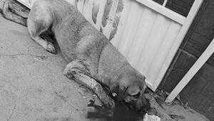 Hayvanları Koruma Gününde kahreden haber