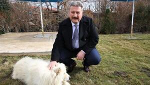 Başkan Palancıoğlundan Hayvanları Koruma Günü mesajı