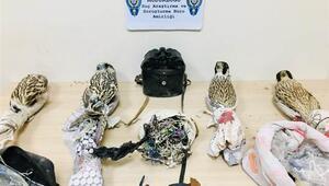 Tuzakla yırtıcı kuşları yakalayanlara ceza yağdı