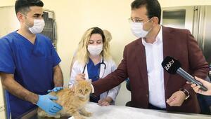 Pandemide terk edilen hayvan sayısı çoğaldı