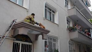 Avcılar'da sundurmada mahsur kalan köpek böyle kurtarıldı