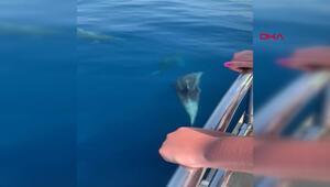 Tekneyle birlikte yüzen yunuslar renkli görüntüler oluşturdu