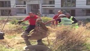 Kırşehirde su kuyusuna düşen koyunu, itfaiye kurtardı