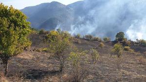 Kastamonu'daki orman yangınları söndürüldü