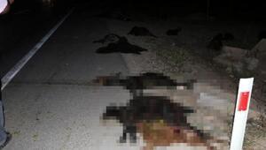 Adanada 3 aracın çarptığı sürüdeki 23 keçi telef oldu