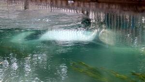 Sulama kanalına düşen otomobildeki kadını vatandaş kurtardı