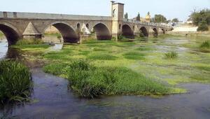 Trakyada kuraklık... Tunca Nehri yeşile büründü