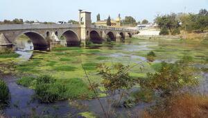 Tunca Nehri yeşile büründü Trakyada kuraklık...