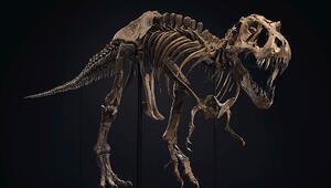 67 milyon yıllık dinozor iskeleti satıldı... Fiyatı dudak uçuklattı