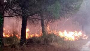 Tarsusta 2 hektar ormanlık alan yandı