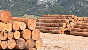 Orman çetesine operasyon: 6 gözaltı