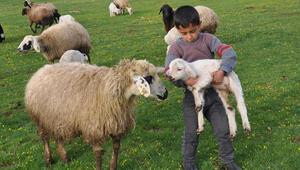 Küçükbaş hayvan varlığı Ziraat Bankasının katkılarıyla artıyor
