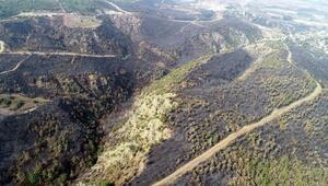 Hatayda yanan ormanlık alan havadan görüntülendi