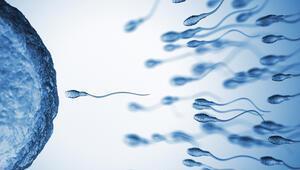 Bilimsel çalışmalarla kanıtlandı… Bu besinler sperm sayısını artırıyor