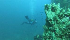 Denizlerin hayalet ağ avcısı Aksona iş başında
