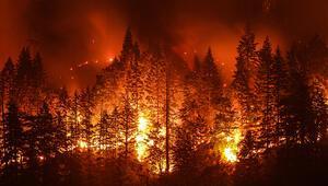82 yıla dair korkutan rakam: Kıbrıs'ın bir buçuk katı orman yandı