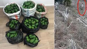 Antalyada avokado hırsızı 2 kardeş, çaldıklarını satamadan yakalandı