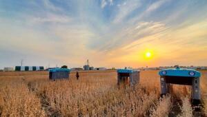 Googleın robotları tarladaki ürünü tek tek inceleyip çiftçiye bilgi verecek