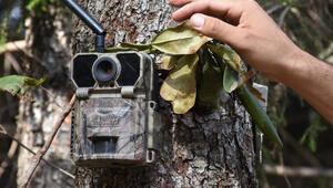 Trabzonda ormanları fotokapanlar koruyacak