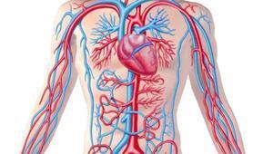 Aort damarı nedir Aort damarı nerede İşte aort damarıyla ilgili bilgiler