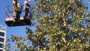 Büyükşehir Belediyesi, parklarda sonbahar çalışması başlattı