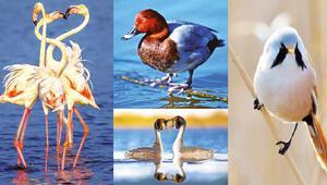 İstanbul'un kuş bankası Küçükçekmece