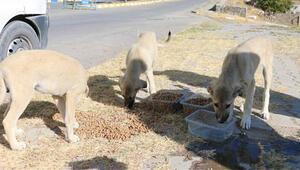 Sokak hayvanları için doğaya su ve yiyecek bıraktılar