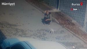 Köpeği önce sevdi, sonra kaçırdı O anlar kamerada