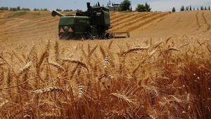 Son dakika... Buğday, arpa ve mısırda gümrük vergisi sıfırlandı