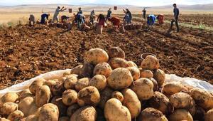 Afyonkarahisarda kışlık patates fiyatı üreticinin yüzünü güldürdü